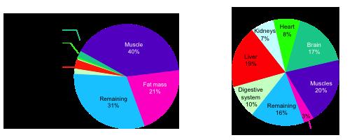 Соотношение массы к затратам энергии