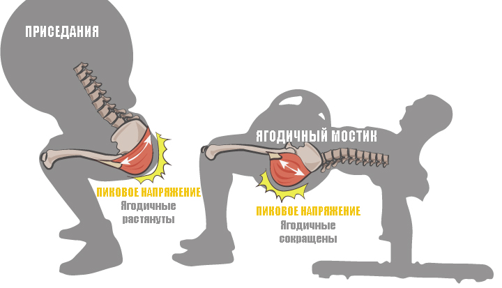 пиковое напряжение мышц