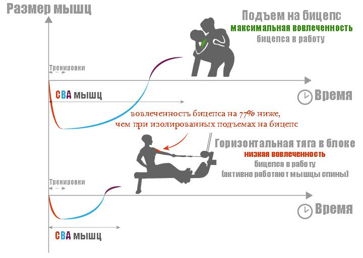 мышечная активность