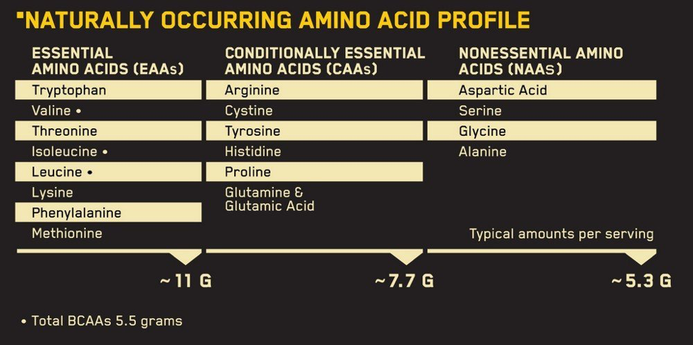 аминокислотный состав протеина